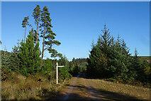 NJ4748 : Forest Waymarker by Anne Burgess