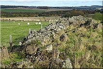 NJ5046 : Old Field Dyke by Anne Burgess