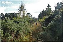 NJ5146 : Grassy Path by Anne Burgess