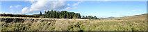 NJ5145 : Grassland by Anne Burgess