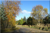 NJ5143 : Road to Roadburn by Anne Burgess