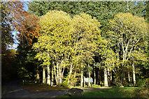 NJ5041 : Bin Hill Forest Walks by Anne Burgess