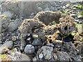 SS6691 : Sand worm castle by Alan Hughes