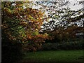 SE2534 : Autumn oak leaves, Houghley Gill by Stephen Craven