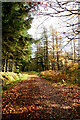 NZ0426 : Track to Tinker Hills Plantation by Andy Waddington