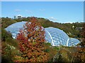 SX0454 : Autumn colour at the Eden Project by Rod Allday