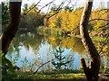 SK9765 : A woodland pond near Waddington by Oliver Mills