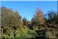 SE5182 : Cleveland Way in Kilburn Moor Plantation by Chris Heaton