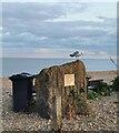 TQ6503 : Old Sea Defences, Pevensey Bay by PAUL FARMER