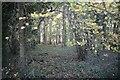 TF0516 : Afternoon light by Bob Harvey