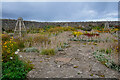 NU1341 : Holy Island : The Gertrude Jekyll Garden by Lewis Clarke