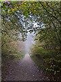 TF0820 : Path through the woods by Bob Harvey