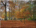 SK2579 : Autumn colour in Granby Wood by Graham Hogg
