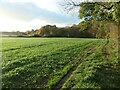 SK3606 : Public footpath from Shackerstone to Twycross by Christine Johnstone