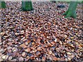 TF0720 : Beech Leaf Litter by Bob Harvey