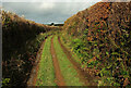 SX7756 : Green lane to Key's Englebourne by Derek Harper