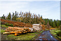 NY9447 : Timber stack at Ramshaw by Trevor Littlewood