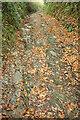 SX7756 : Green lane above Monkey Oak by Derek Harper
