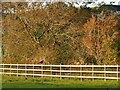 SD3081 : Pheasant on a fence near Gawith Field Lodge by Stephen Craven