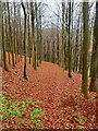 SE5588 : East Leys Wood by Mick Garratt