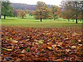 SK2571 : Autumn leaves in Chatsworth Park by Graham Hogg