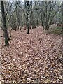 TF0820 : Leaf litter by Bob Harvey