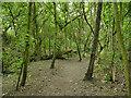 SE1224 : Footpath through woods near Pinnell Bridge by Stephen Craven