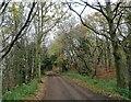 NZ1052 : Trees along the Derwent Walk by Robert Graham