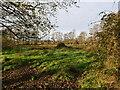 TG3030 : Scrub grassland by David Pashley