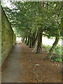 SE2338 : Wall with row of yew trees, Horsforth Hall Park by Stephen Craven