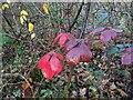 TF0821 : A splash of colour by Bob Harvey