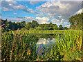 SE6523 : Ell Pond by Scott Robinson