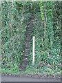 ST5567 : A steep path by Grove Farm by Neil Owen