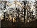 TF0820 : Bare trees by Bob Harvey