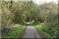 TQ5816 : The Cuckoo Trail by N Chadwick
