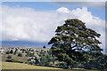 NZ0900 : Lone tree in field near Skelton by Trevor Littlewood