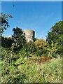 TQ6404 : Pevensey Castle by PAUL FARMER