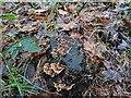 TF0820 : Late fungus by Bob Harvey