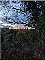 TF0820 : Pinkness by Bob Harvey