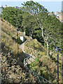 TA0487 : Path in South Cliff Gardens by Stephen Craven