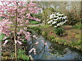 TQ0658 : Wisley - Spring Flowers by Colin Smith