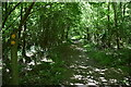 TQ6427 : Footpath junction, Batt's Wood by N Chadwick