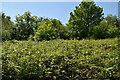 TQ6327 : Bracken, Batt's Wood by N Chadwick