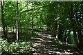 TQ6327 : Footpath, Batt's Wood by N Chadwick