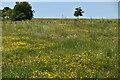 TQ6227 : Wildflower meadow, Wadhurst Park by N Chadwick
