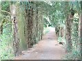 TQ1352 : Polesden Lacey - Embankment by Colin Smith