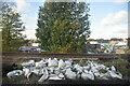 TQ2672 : Trackside bags by N Chadwick