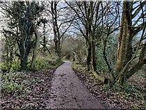 SP0981 : John Morris Jones Walkway by Mat Fascione