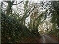 ST0024 : Hollow lane near Frandale Farm by David Smith