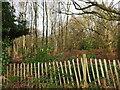 TG3031 : Scrub Woodland beside Mill Road by David Pashley